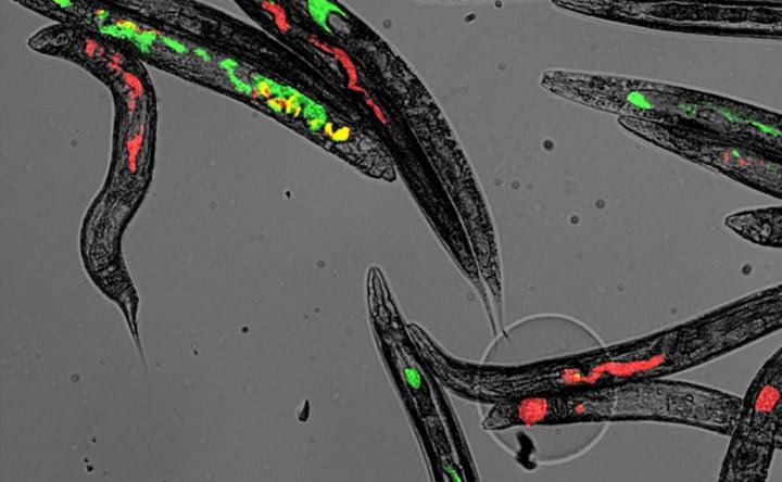 La diversità nel microbioma è influenzata da incontri casuali