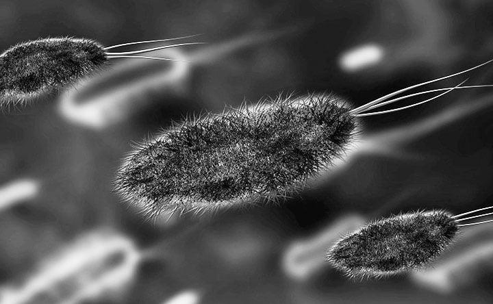 Intestino: l'importanza delle rare specie batteriche per la nostra salute