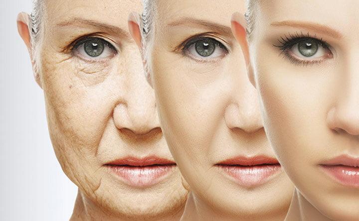 L'aiuto dei batteri intestinali per rallentare il processo di invecchiamento