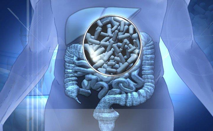 Gli acidi biliari sono influenzati dal microbiota