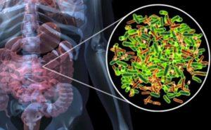 Il microbioma intestinale regola il sistema immunitario