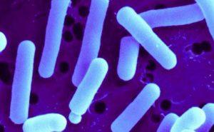 I probiotici: alleati contro il cancro al colon?