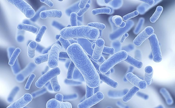 Guida ai probiotici