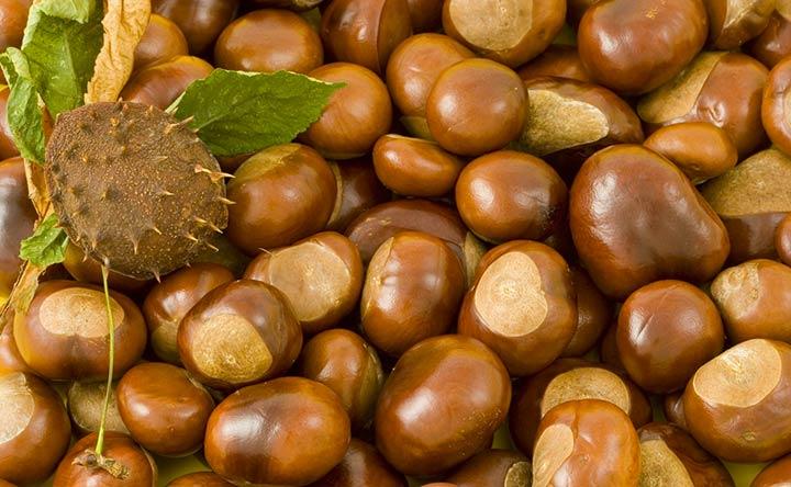 Castagne: caratteristiche e benefici per l'intestino