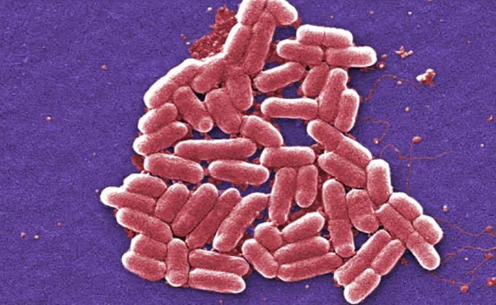Il microbiota influisce anche sulla nostra fisiologia