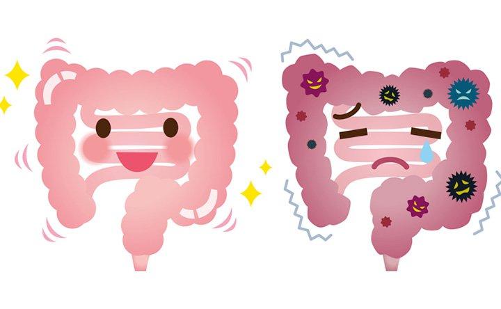 Flora batterica intestinale: ecco i benefici e come ripopolarla