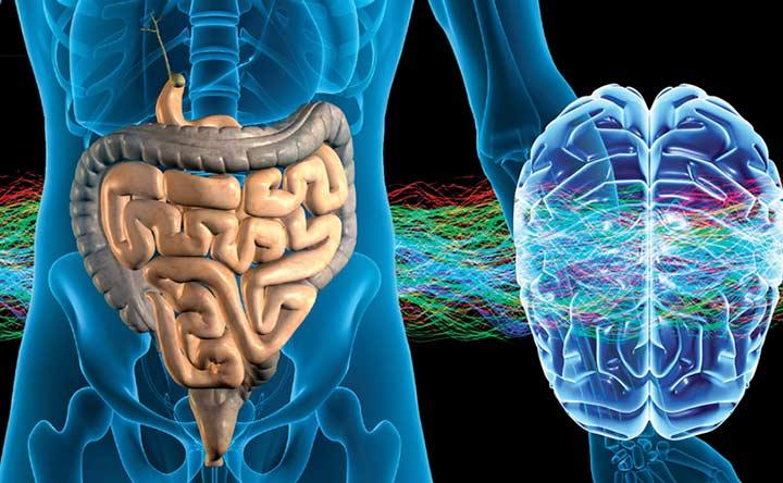 Un intestino maltrattato può causare ictus