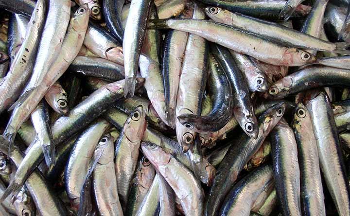 Intestino in forma senza rinunciare al gusto con il pesce azzurro