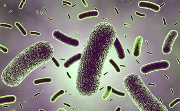 Guida ai probiotici: come leggere l'etichetta di un integratore