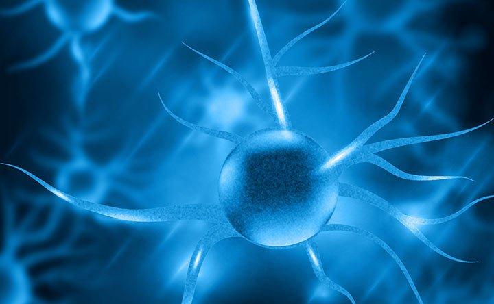 Cervello e intestino: forse scoperto il legame mancante