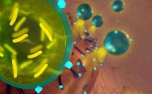 Antibiotico-probiotico: combinazione efficace contro i batteri di una ferita infetta
