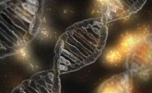 I geni sono influenzati dai batteri intestinali?