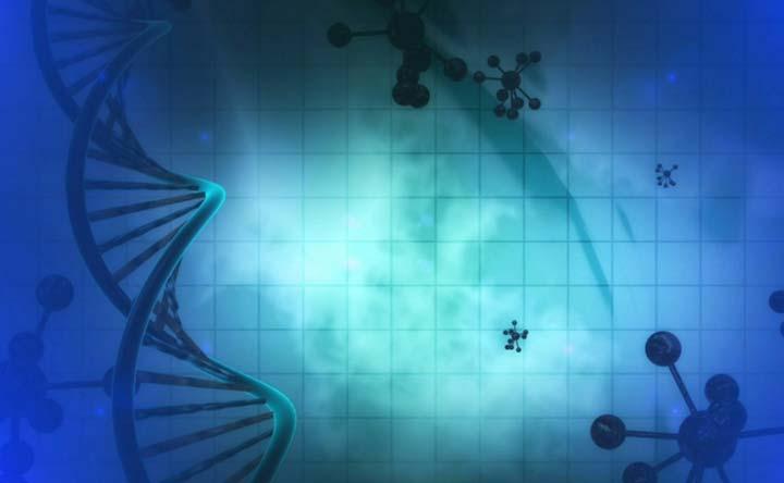 Il gene che digerisce l'amido e i batteri intestinali